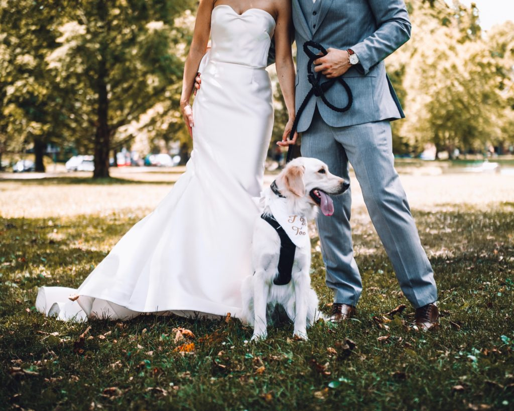Image describes a dog at a wedding day.