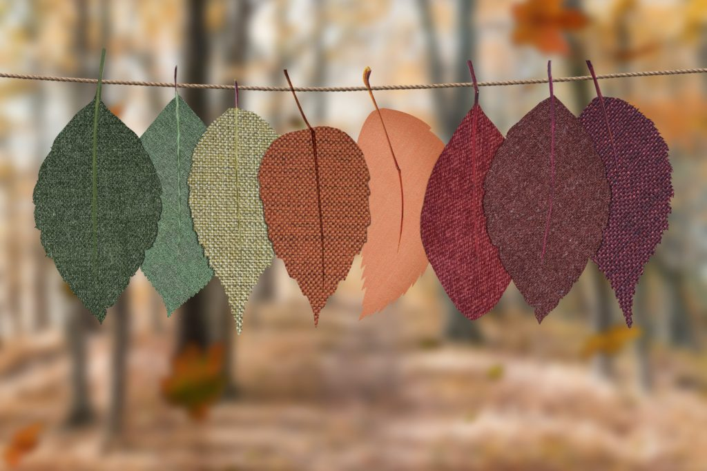 Image describes autumn colours.